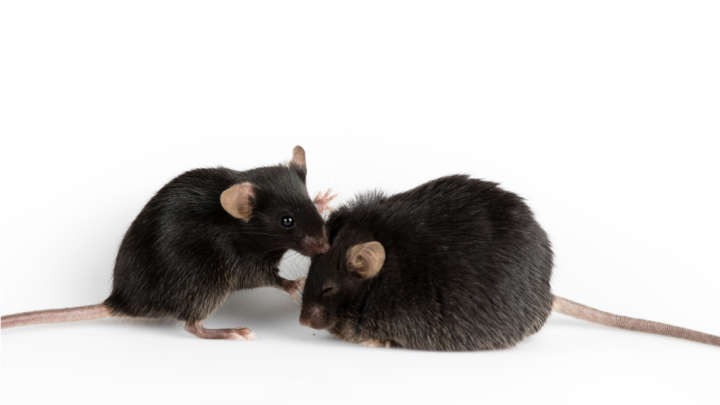 A Switch For Turning On Fat Burning Has Been Discovered In The Mouse Brain