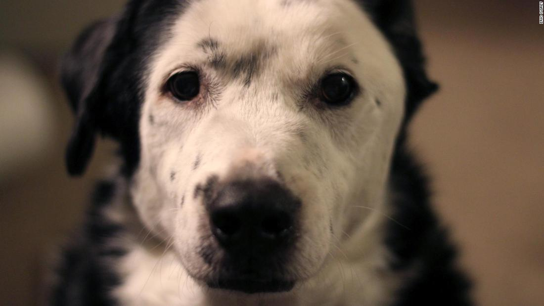 How an overweight shelter dog saved Eric O'Grey's life