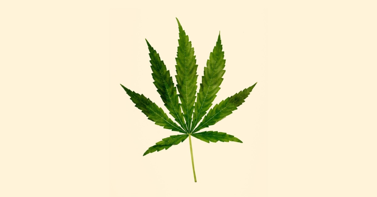 Plenties of Physicians Recommend Weed Without Understanding It