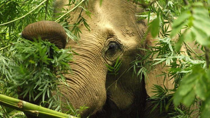 "Flavia, The World's ""Saddest"" Elephant, Dies At 47"