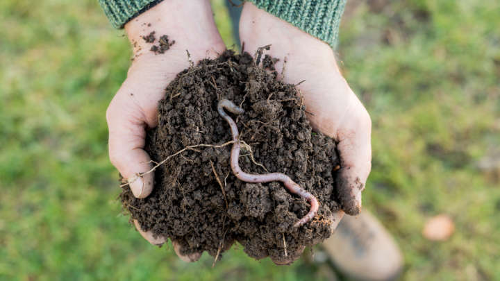 Microplastics In Soil Have A Damaging Effect On Earthworms